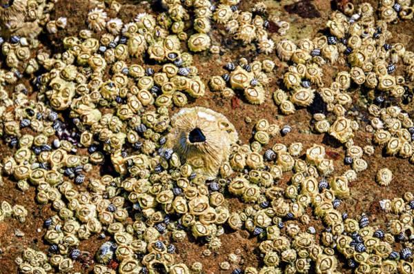 Isla Wall Art - Photograph - Isla De Espiritu Santo, Baja, Mexico by Mark Williford