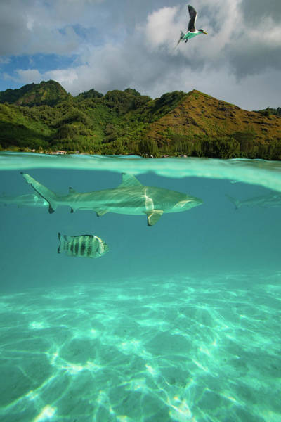Moorea Photograph - Over Under, Half Water Half Land by Panoramic Images
