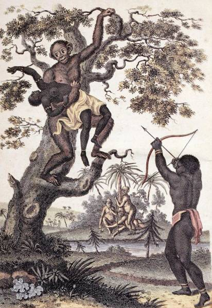 Abduction Wall Art - Photograph - 1795 Ape Abducts Woman Sibly Chimp Orang by Paul D Stewart