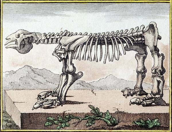 Wall Art - Photograph - 1799 Bru Megatherium Skeleton Early Color by Paul D Stewart