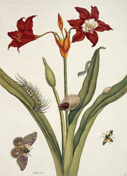 Insects Of Surinam Art Print by Natural History Museum, London/science Photo Library