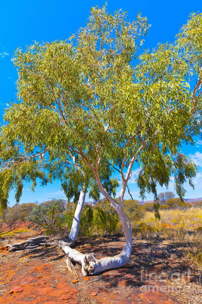 Wall Art - Photograph - Palm Valley Central Australia  by Bill  Robinson