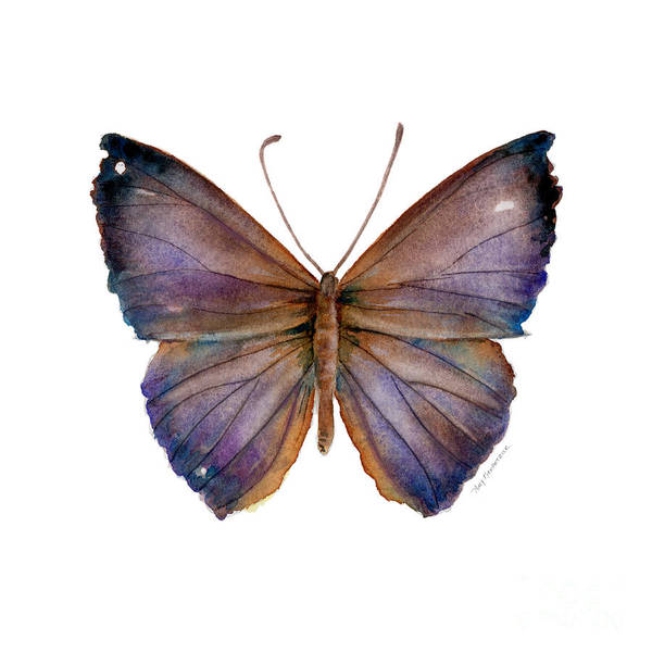 Painting - 18 Purple Pandemos Butterfly by Amy Kirkpatrick