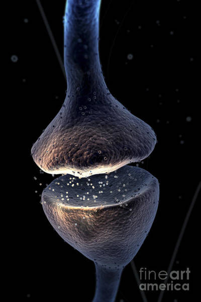 Photograph - Synapse by Science Picture Co