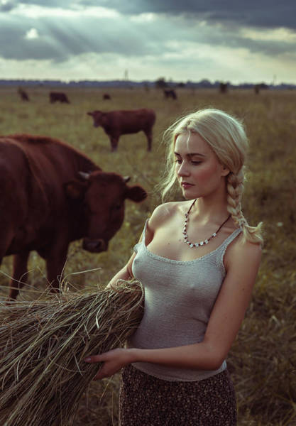 Cow Photograph - Untitled by David Dubnitskiy