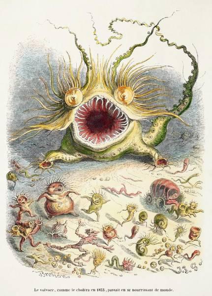 Wall Art - Photograph - 1833 Cholera Pandemic Grandville Cartoon by Paul D Stewart