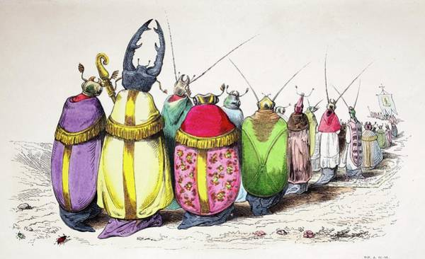 Coleoptera Photograph - 1842 Caricature Coloured Church Beetles by Paul D Stewart