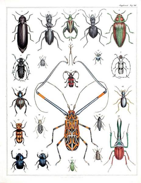 Encyclopedia Wall Art - Photograph - 1843 Oken Beetle Plate Illustration by Paul D Stewart