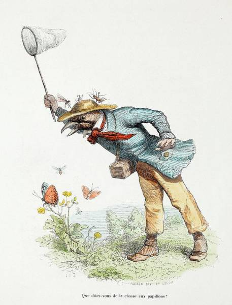 Photograph - 1845 Victorian Butterfly Collector by Paul D Stewart