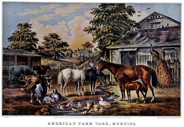 Currier And Ives Painting - 1850s American Farmyard Morning - by Vintage Images