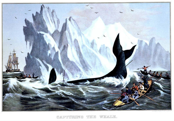 Skill Painting - 1850s Capturing The Whale - Currier & by Vintage Images