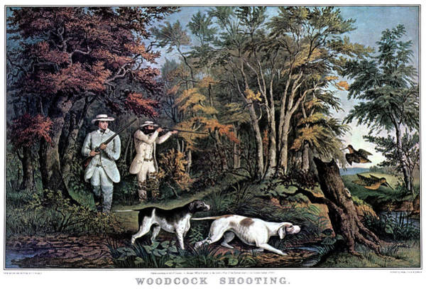Currier And Ives Painting - 1850s Woodcock Shooting - Currier & by Vintage Images