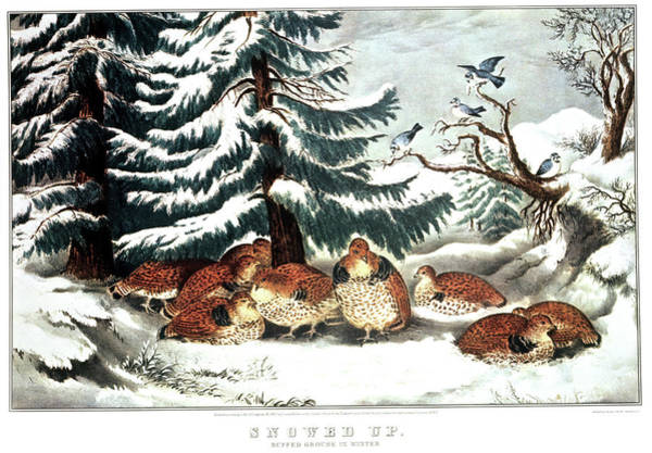 Currier And Ives Painting - 1860s Snowed Up - Ruffed Grouse by Vintage Images