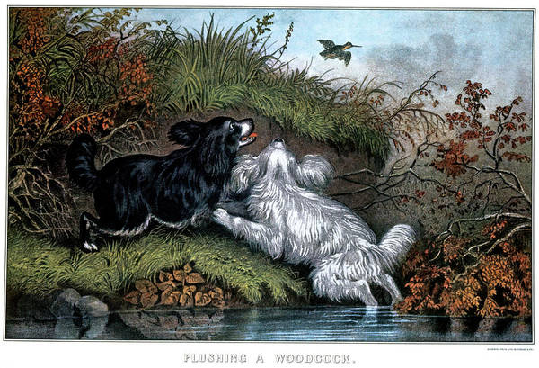 North American Birds Painting - 1860s Two Spaniel Dogs Flushing by Vintage Images