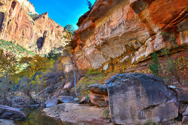 Photograph - Zion National Park by Ray Mathis