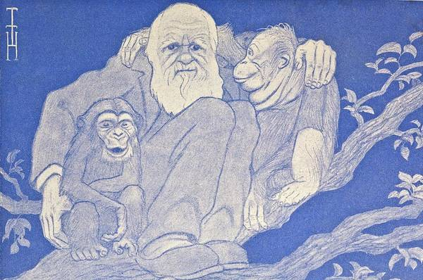 Wall Art - Photograph - 1909 Cartoon Darwin With Apes Detail by Paul D Stewart