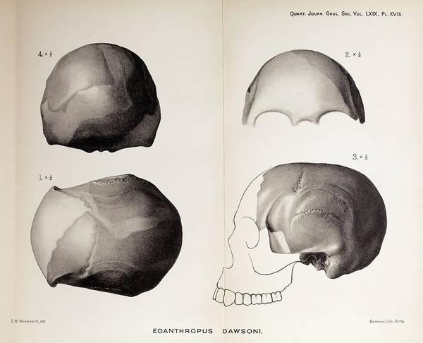 Fraud Photograph - 1913 Toned Skull Plate Piltdown Man Hoax by Paul D Stewart