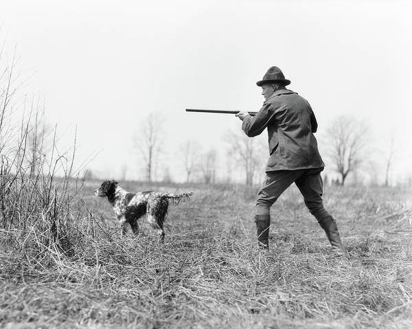 Setters Photograph - 1920s Man Hunter With Shotgun In Field by Animal Images