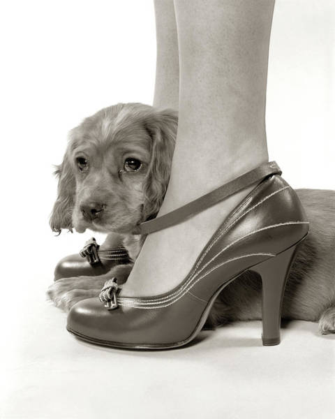 Mistress Photograph - 1930s 1940s Shy Young Puppy Dog Looking by Animal Images
