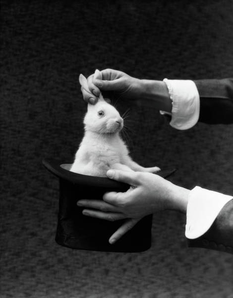 Hands Of Time Photograph - 1930s Magician Hands Pulling Rabbit by Vintage Images