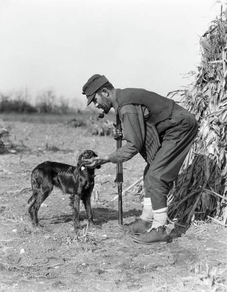 Setters Photograph - 1930s Man Hunter With Shotgun In Corn by Animal Images