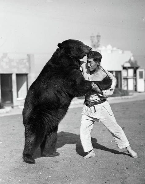 Wall Art - Photograph - 1930s Man Trainer Wrestling With Bear by Animal Images