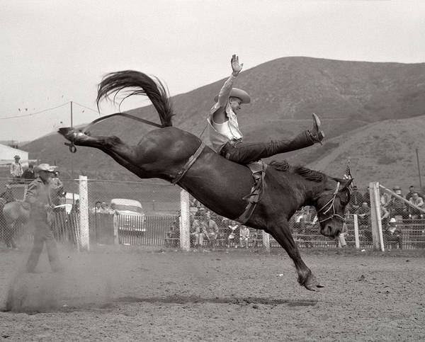 Black Buck Photograph - 1950s 1953 Cowboy Bronco Buster Riding by Animal Images