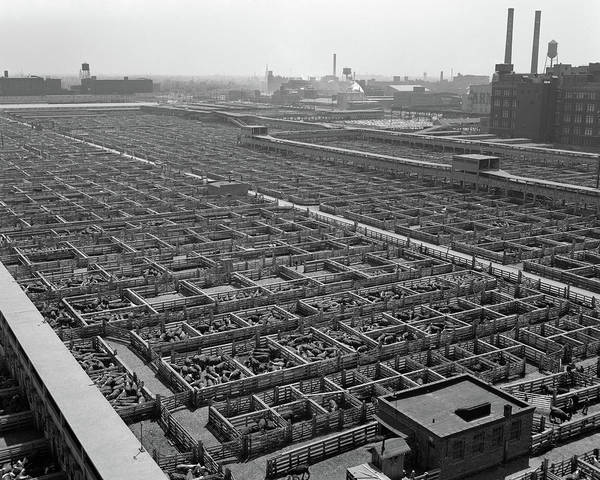 Stockyards Photograph - 1950s Aerial View Of Cattle Pens by Vintage Images