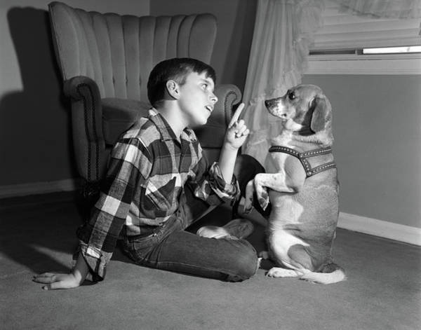 Dog Training Photograph - 1950s Boy In Plaid Shirt Shaking Finger by Vintage Images