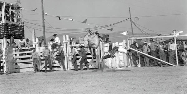 Black Buck Photograph - 1950s Cowboy Falling Off White Bucking by Animal Images