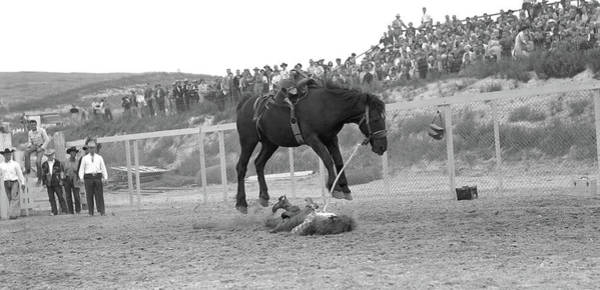Black Buck Photograph - 1950s Cowboy On Ground Under Horse by Animal Images