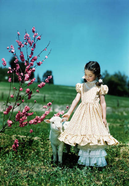 Wall Art - Photograph - 1950s Girl Wearing Ruffled Dress by Animal Images