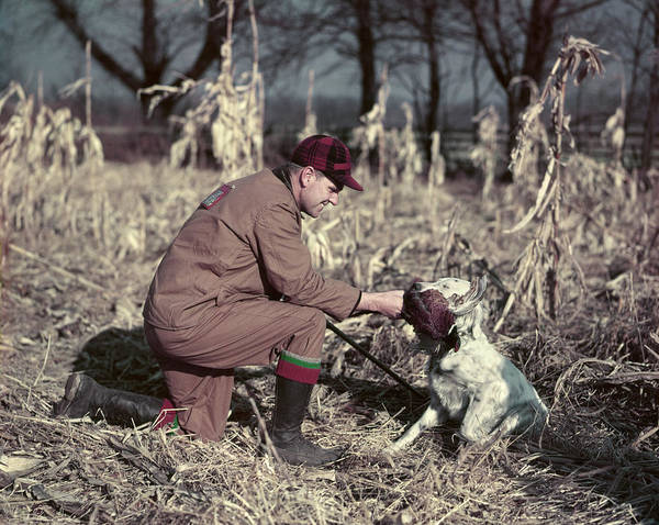 Setters Photograph - 1950s Man Hunter Kneeling In Autumn by Animal Images