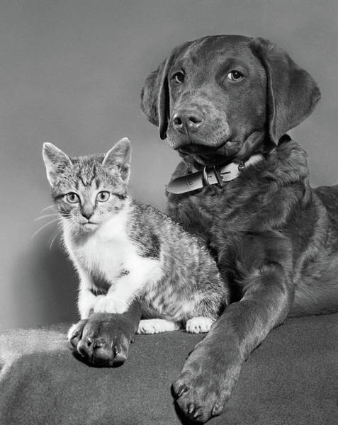 Pet Care Photograph - 1950s Portrait Of Lab Mix Dog Lying by Vintage Images