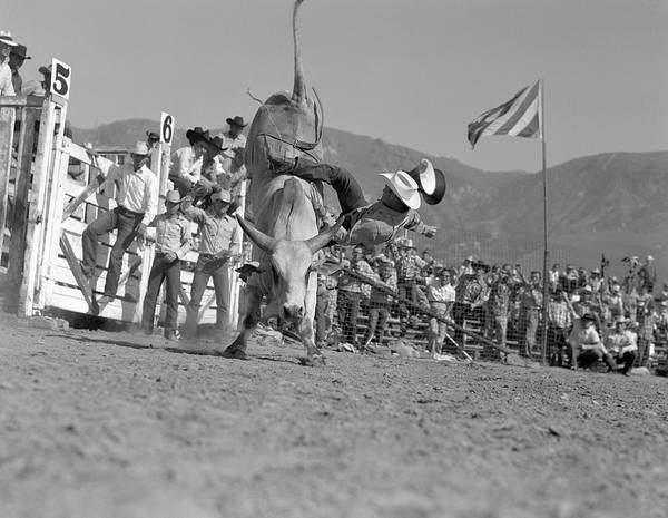 Black Buck Photograph - 1950s Rodeo Bull Rider Male Cowboy by Animal Images