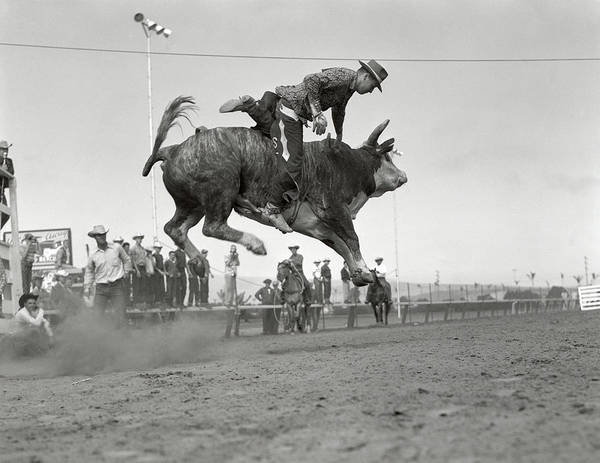 Black Buck Photograph - 1950s Rodeo Bull Riding Cowboy by Vintage Images
