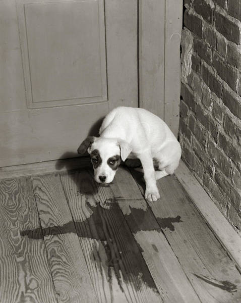 Wall Art - Photograph - 1950s Sad Dog In Corner Ashamed House by Vintage Images