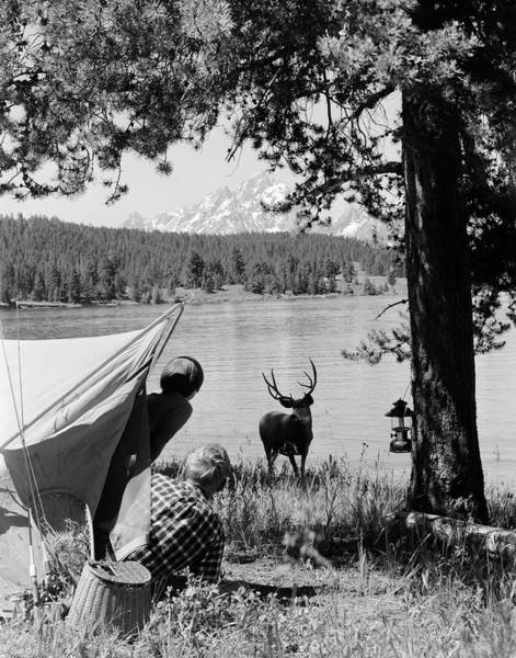 Black Buck Photograph - 1960s Campers At Grand Teton National by Animal Images