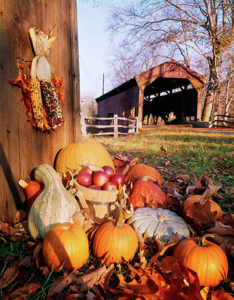 Wall Art - Photograph - 1960s Harvest Display Of Pumpkins by Vintage Images