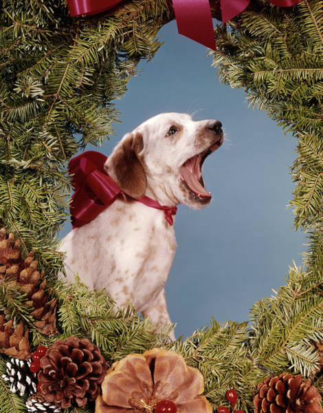 Howling Photograph - 1960s Howling Singing Puppy Dog by Vintage Images