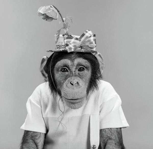 Monkey Flower Wall Art - Photograph - 1960s Portrait Monkey Chimpanzee by Vintage Images