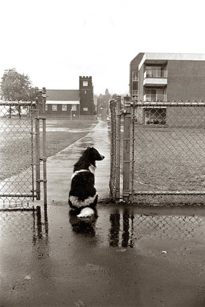 1970s Black White Spotted Dog Sitting Art Print