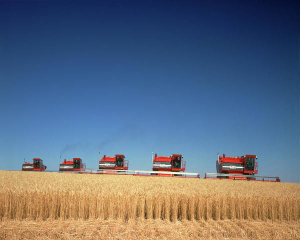 Nebraska Photograph - 1970s Five Massey Ferguson Combines by Vintage Images