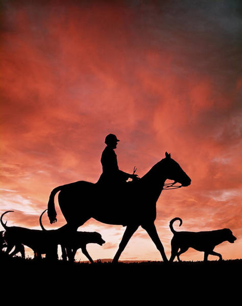 Wall Art - Photograph - 1970s Silhouetted Anonymous Man Riding by Animal Images