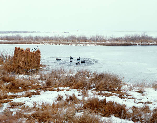 Duck Hunt Photograph - 1970s Two Men Duck Hunting In Winter by Animal Images