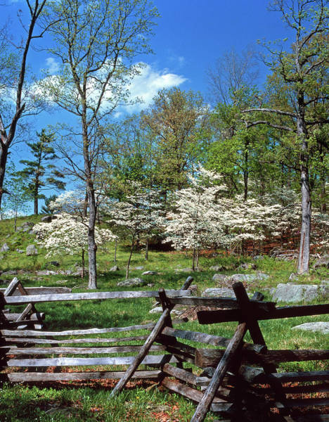 Gettysburg Battlefield Photograph - 1980s Spring Scenic Dogwood Blossoms by Vintage Images