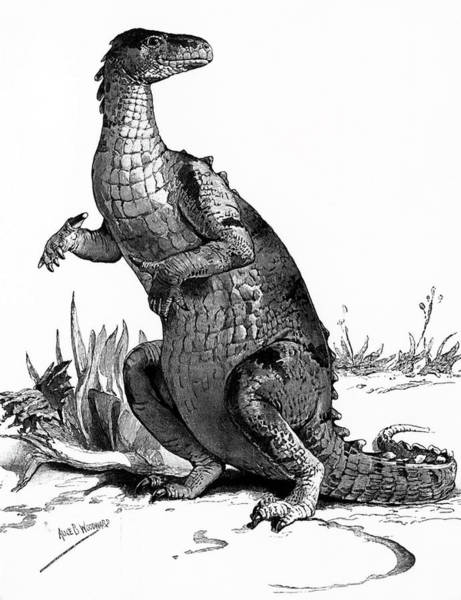 Archival Painting - 1990s Engraving Of Dinosaur Iguanodon by Vintage Images
