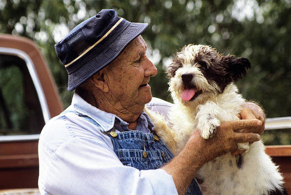Pickup Man Photograph - 1990s Older Man Wearing Hat by Animal Images