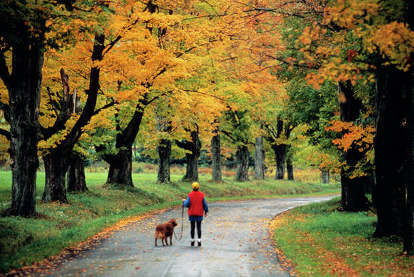 Esteem Photograph - 1990s Young Woman Walking Dog by Vintage Images