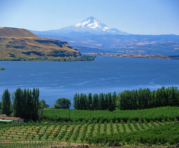Photograph - 1a4525 Mt Hood Columbia River And Vineyards  by Ed  Cooper Photography
